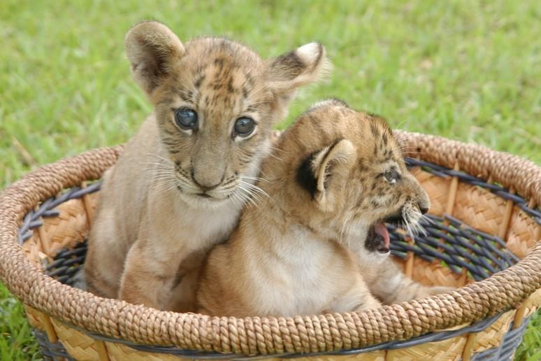 海南热带野生动植物园一改其它城市动物园